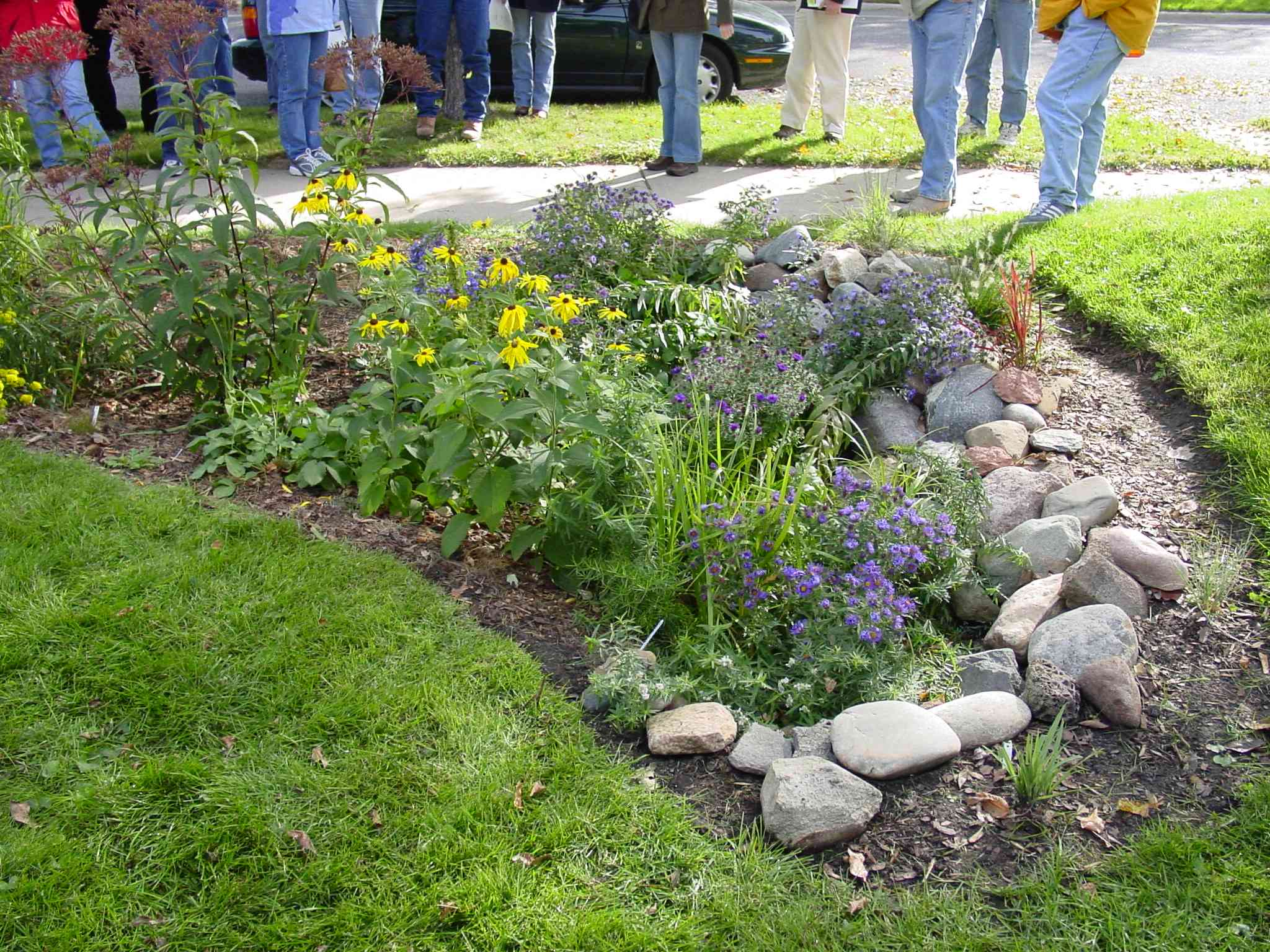 Rain Garden Design some of the rain gardens planted last year look fabulous others are mud pits this morning for example some of the district workers were Rain Garden